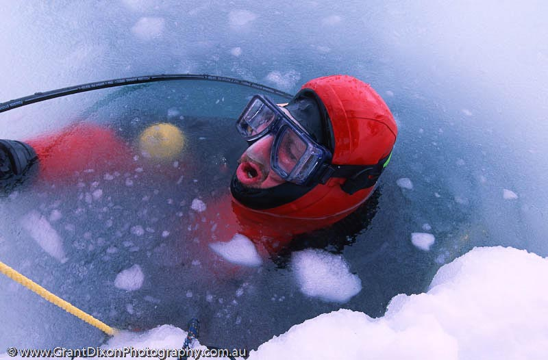 image of Antarctic diving