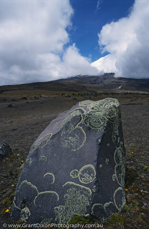 image of Cotopaxi lichen rock
