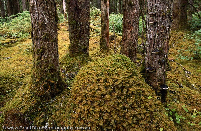 image of Glacier Bay moss forest