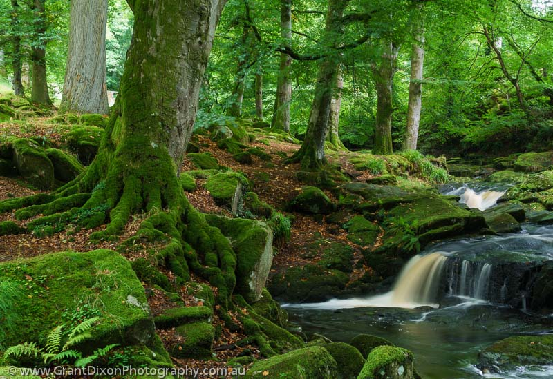 image of Wicklow woodland cascade
