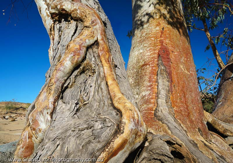 image of Ormiston weathered Red Gums