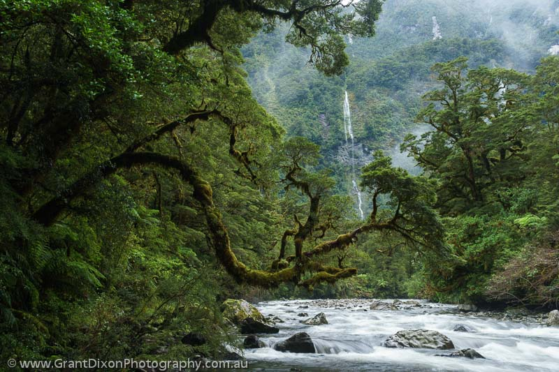 image of Hall Arm rainforest
