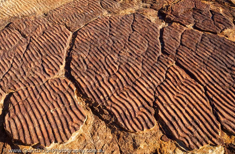 image of Watarrka sandstone ripples 1