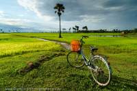 CAMBODIA, Siem Reap area. Bicycle parked overlooking flooded rice fields.