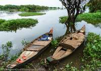 CAMBODIA, Siem Reap, Boats amongst hyacinth, at edge of Tonle Sap lake.