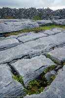 Grikes (fissues) in limestone pavement, The Burren, County Clare, Ireland