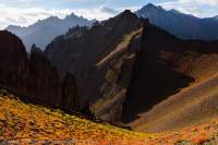 Uplifted, now vertically-dipping sedimentary rock strata of Stok Range, with Autumn (Fall) colour of alpine shrubs, Hemis National Park. Sunrise.
