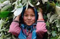 NEPAL. Girl with load of foliage, Makalu Base Camp Trek.