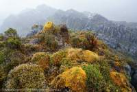 Mossy knoll & limestone karst west of Mt Capella, Star Mountains, Papua New Guinea.