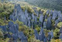 The Pinnacles, limestone karst features up to 45m high, Mulu National Park, World Heritage Area, Sarawak.