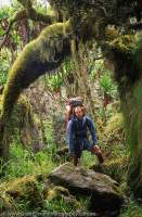 UGANDA, Rwenzori Mountains,